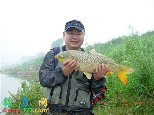 在黄河用自动海竿架加麦钩钓法擒获野生大鲤鱼