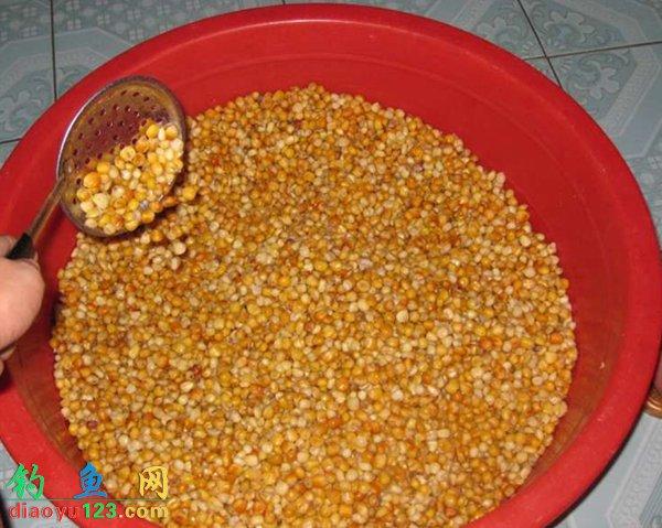玉米被称为素饵之王,玉米粒、玉米糁、玉米面都能钓鱼。尤其是玉米粒是水库钓大鲤鱼的必杀器。下面就介绍一下酒香玉米粒的制作方法。 准备10斤玉米用水侵泡一天  一天过后,将浸泡的玉米加水煮,煮至玉米表皮破皮即可。  将煮好的玉米凉干  把玉米放到还有点温度