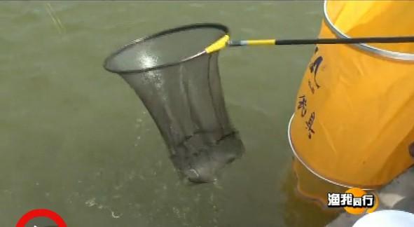 四海钓鱼频道视频223化老师钓黑坑(四)